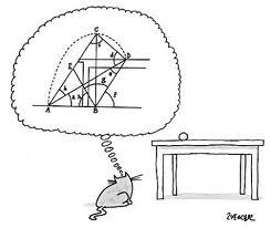 pensamento gato