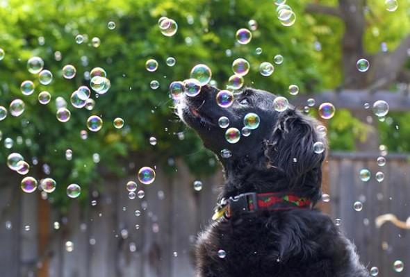 bolha de sabao