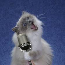 gato cantor divulgacao internet