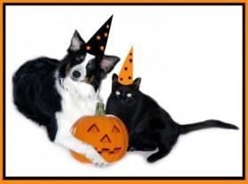 halloween cao e gato