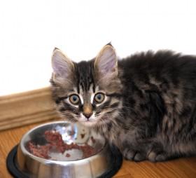 alimetaçao gato