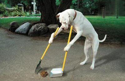 Cachorro trabalhando