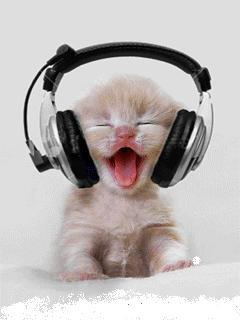 Gato com fone de ouvido