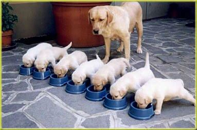 filhotes comendo